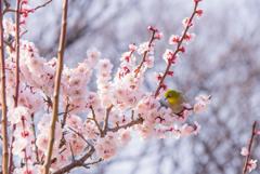 春陽あびて…