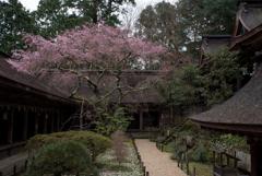 回廊と枝垂れ桜