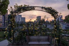 夕刻のRose Garden