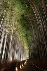 竹林の情趣