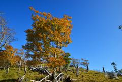 青空と秋色