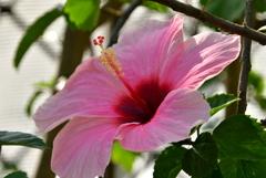 大阪市 咲くやこの花館