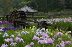 兵庫県 永澤寺