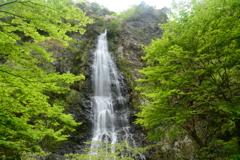 兵庫県養父市 天滝