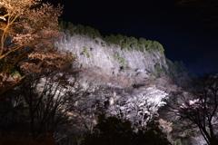 曽爾村 屏風岩桜公苑2017