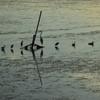 野鳥の楽園 久米田池