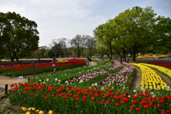 2018万博記念公園 ちゅーりっぷまつり