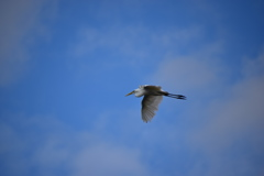 西宮市夙川河口 野鳥の楽園
