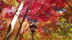兵庫県 有馬温泉瑞宝寺公園
