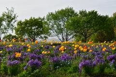 2018万博記念公園 花の丘