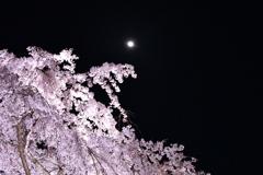 京都府立植物園 ライトアップ