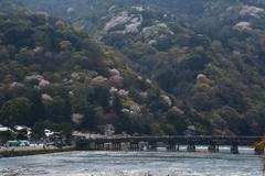 古都の春 嵐山