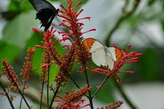 伊丹市立昆虫館 蝶の館