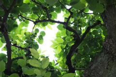 新緑の訪れ