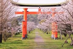 桜並木を追い求めて