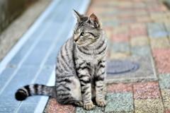 公園で見かけた野良猫さん