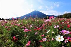 生駒高原の秋