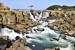 春の曽木の滝