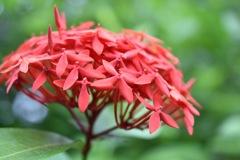 flower(*^o^*)