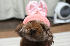 ウサギさん*・゜゚・*:.。..。.:*・