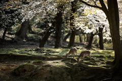 鹿たちの楽園が