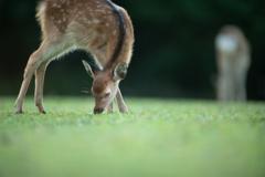 小鹿ちゃんの朝ごはん