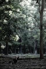 角切りすすむ春日の森