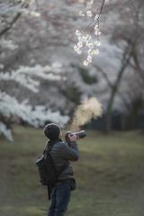 桜満開でも・・・