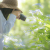 奥さんと紫陽花