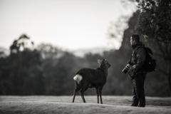 彼を慕う鹿さんは・・・