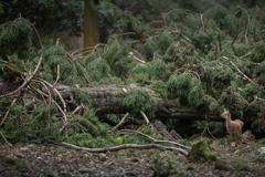 破壊された森