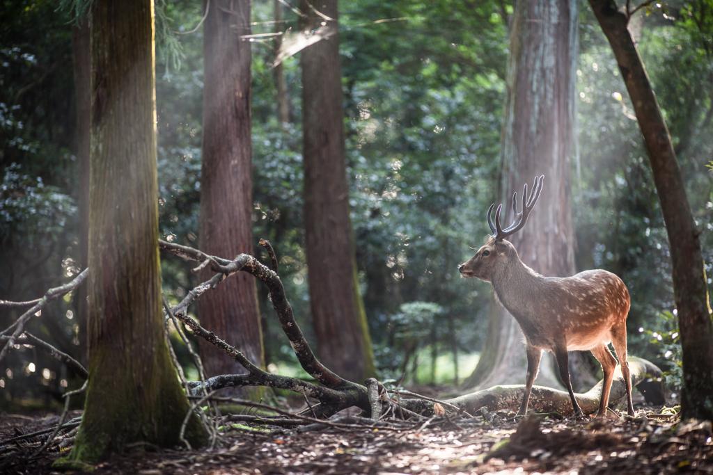 夏の日の鹿乃丞