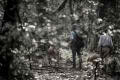 ヒ カ リ の森