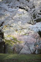 そして、桜の森にも・・・