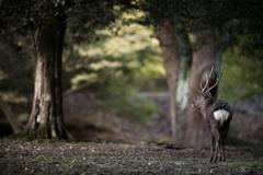 奈良公園のいたるところに・・・