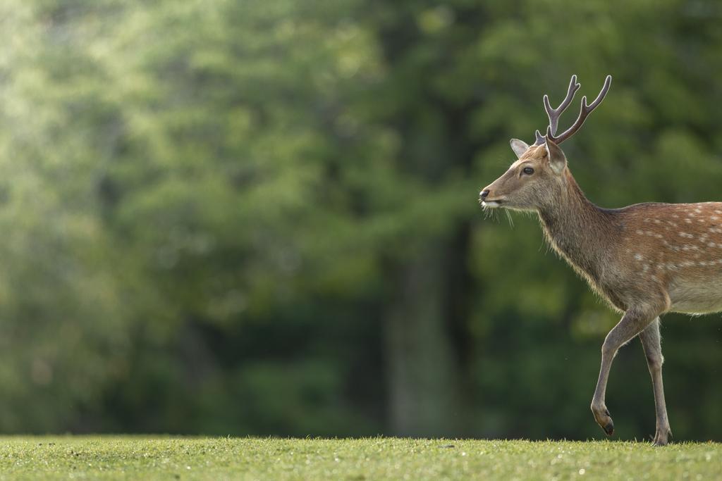 これからが楽しみな鹿さん