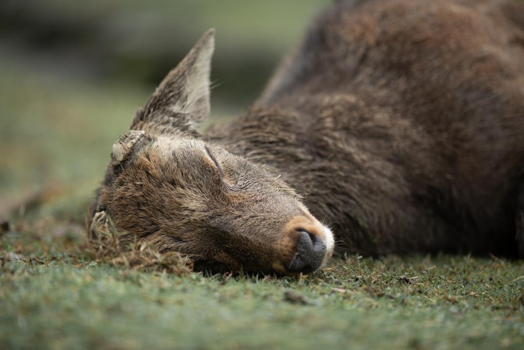 おやすみ、ロク