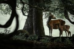 シダの森の母子