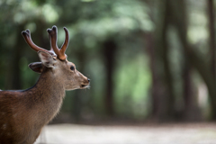 今朝の鹿乃丞