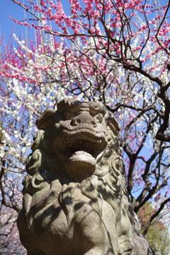 狛犬_新井天神北野神社