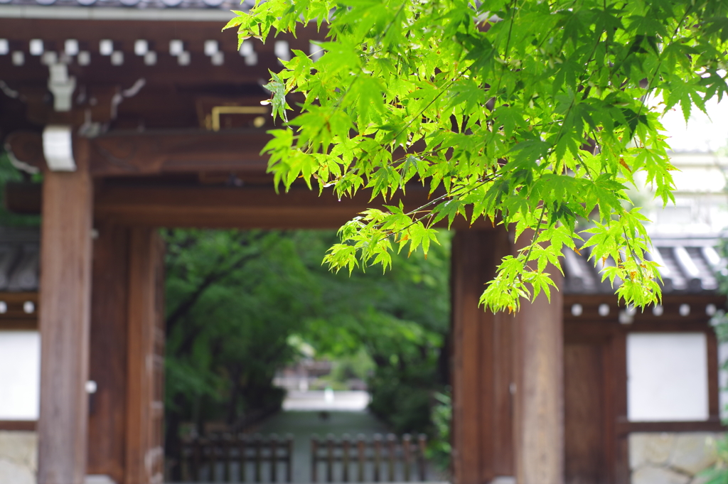 楓_高円寺