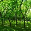 楓林_北の丸公園