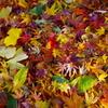 去り行く秋の詰め合わせ