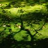 影_旧古河庭園