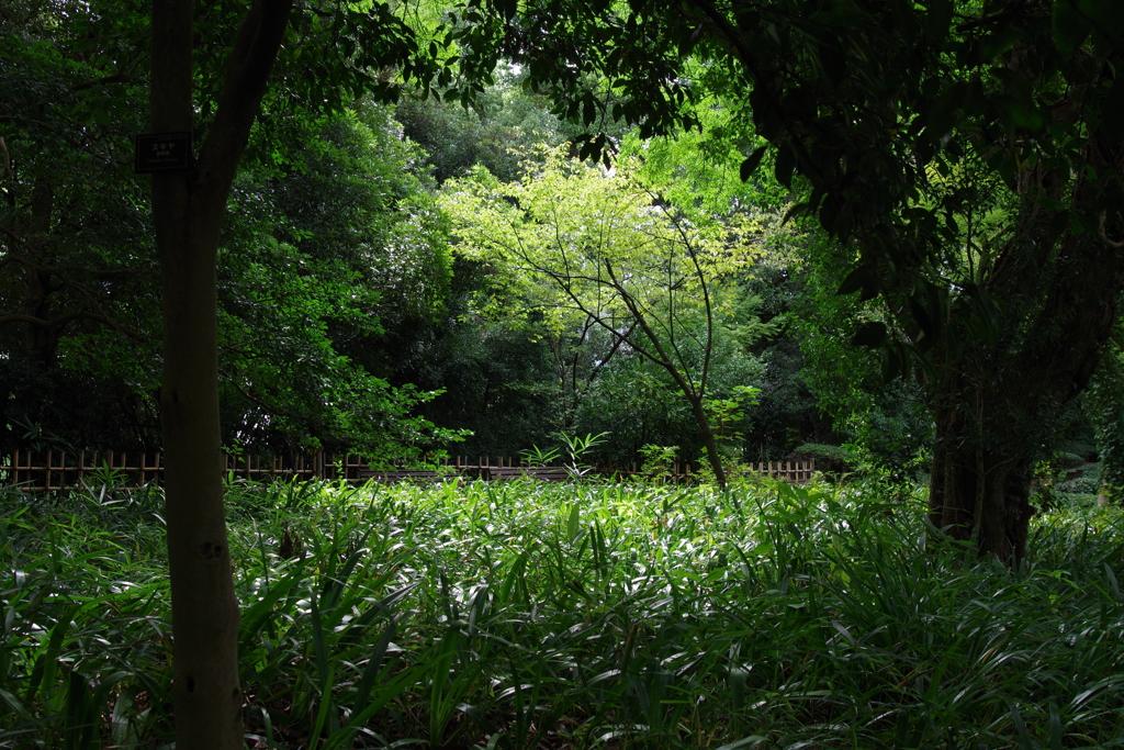 二の丸庭園_皇居東御苑