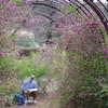 萩のトンネル_神代植物公園