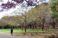 百日紅の踊り_代々木公園