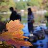 紅葉_昭和記念公園