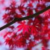 春紅葉_蚕糸の森公園