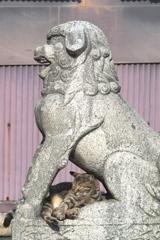 狛猫 その1